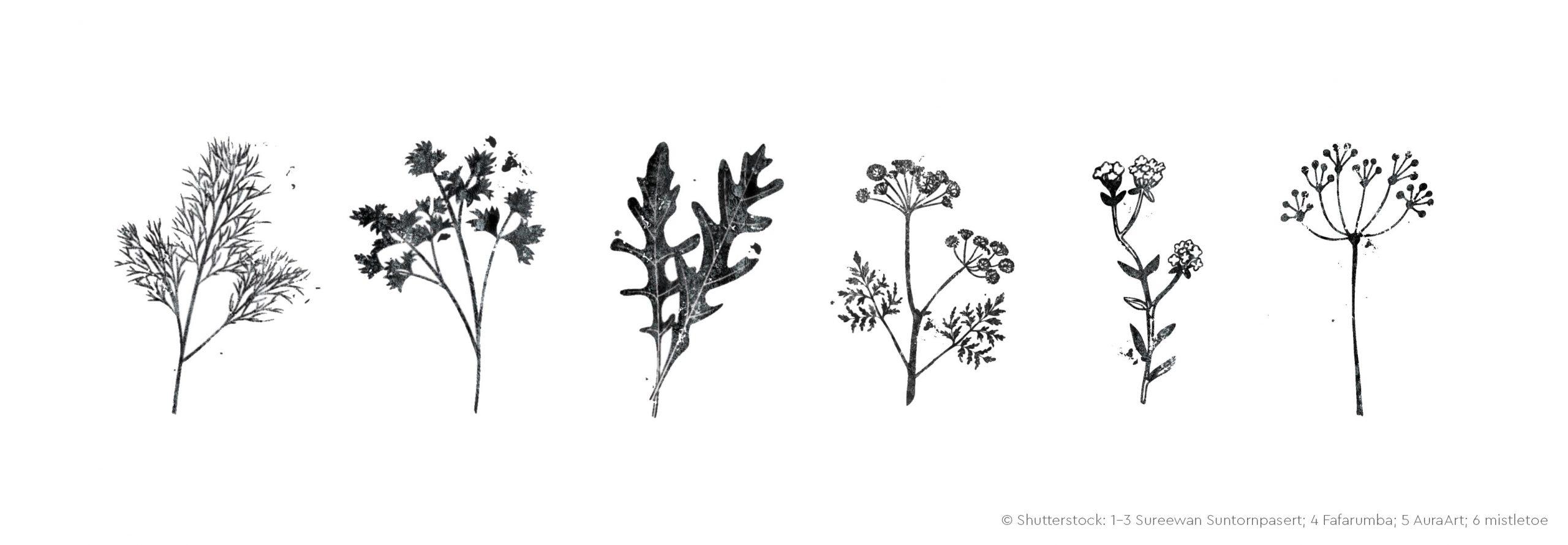 Illustrationen von Pflanzen